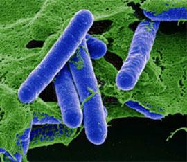 interventi per eliminare il batterio del botulino